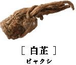 [ 白芷 ]ビャクシ