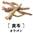 [ 黄芩 ]オウゴン